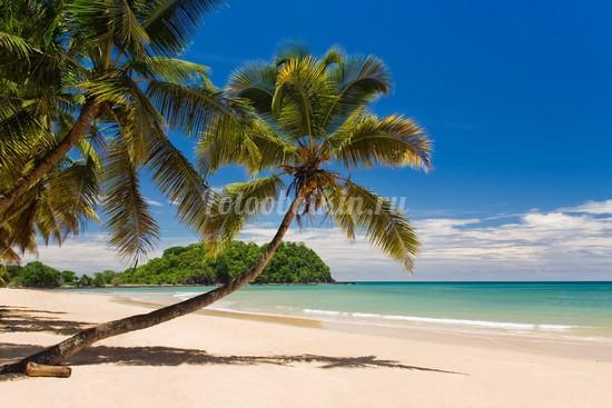 Пальмы над золотистым песком