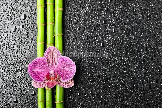 Орхидея на бамбуке
