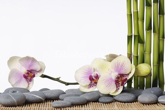 Нежно розовая орхидея