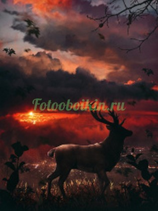 Олень на фоне красного заката