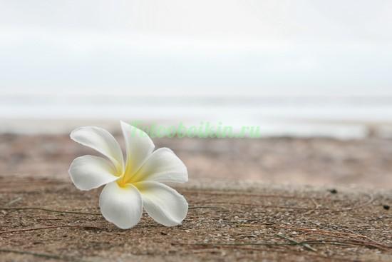Белый цветочек на песке