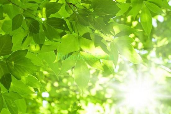 Яркие листья