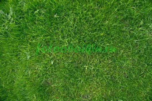 Травы-травы