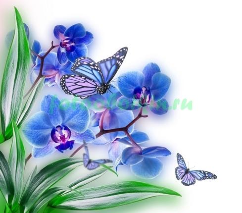 Бабочки на синей орхидеи