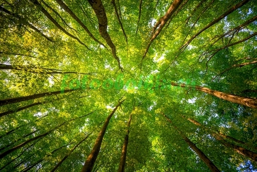 Верхушки деревьев