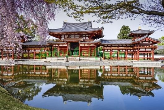 Япония цветущая сакура