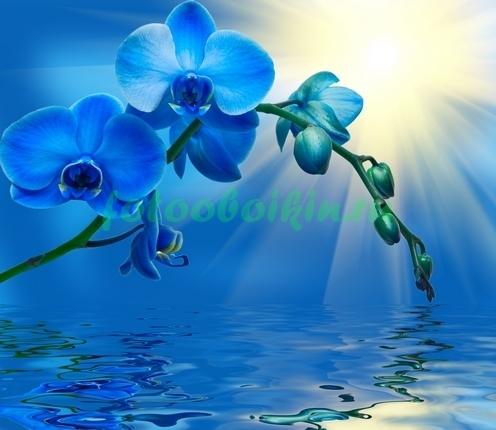 Ультрамариновая ветка орхидеи