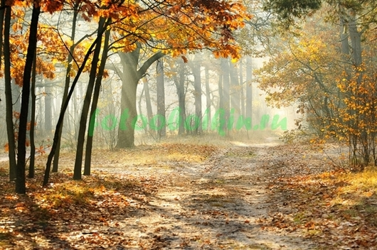 Туман в осеннем лесу