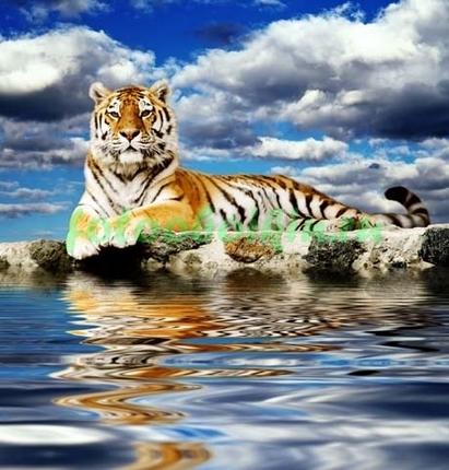 Тигр у воды