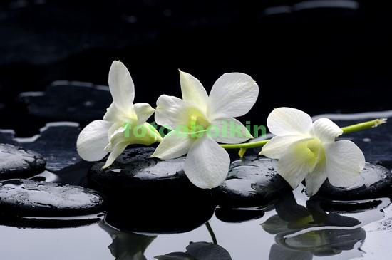 Фотообои Белая орхидея с черными камнями