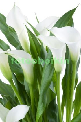 Белые цветы с зелеными листиками