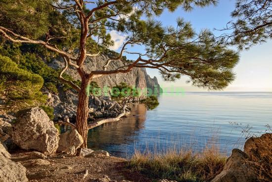 Фотообои Красивая сосна на берегу