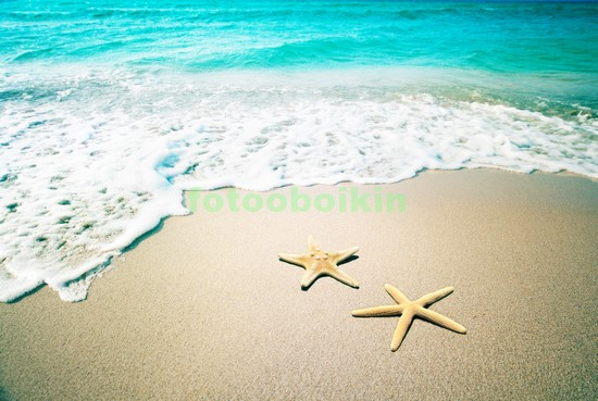 Фотообои Две морские звезды на берегу