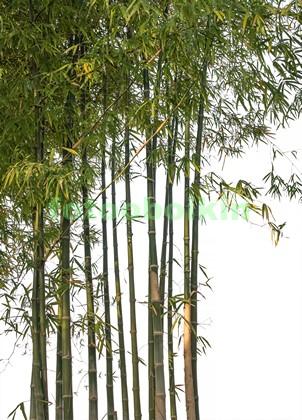 Фотообои Ветки бамбука на белом фоне