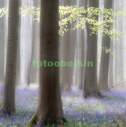 Фотообои Деревья с фиалками