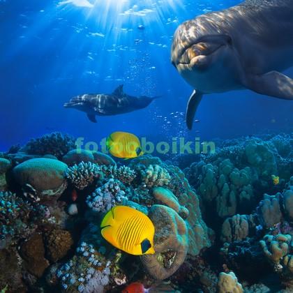 Фотообои Дельфины и желтые рыбки