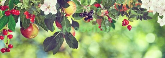 Фотообои Садовые ягоды