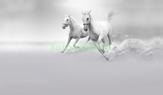 Фотообои Белые коне на сером фоне