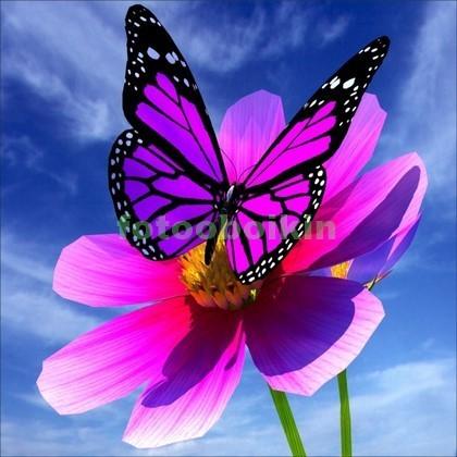 Фотообои 3D бабочка на цветке