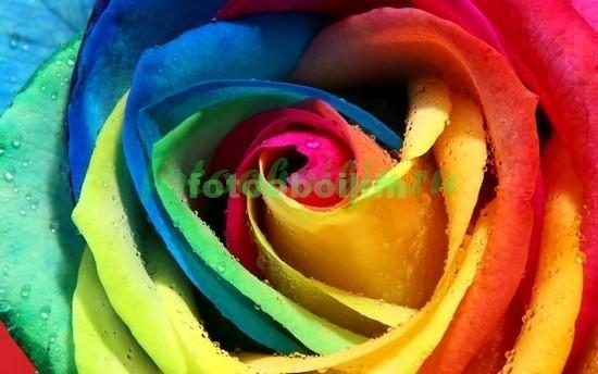 Фотообои 3D цветные лепестки