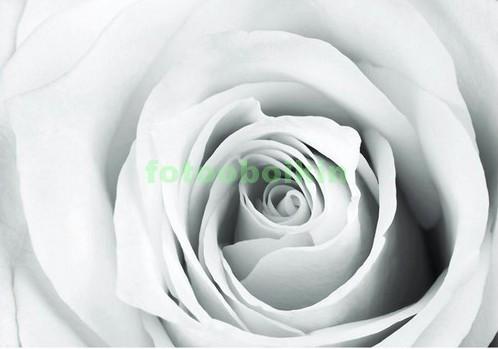 Фотообои Белая роза в чб