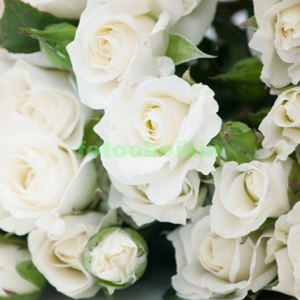 Фотообои Белые розы с листьями
