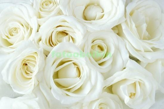 Фотообои Белые яркие розы
