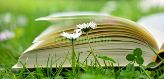 Фотообои Книга на траве