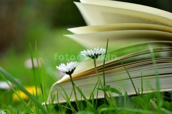 Фотообои Книга на траве с цветами