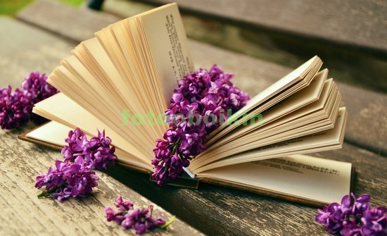 Фотообои Книга с цветами лаванды