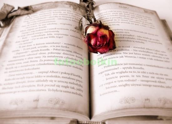 Фотообои Книга с засушеной розой