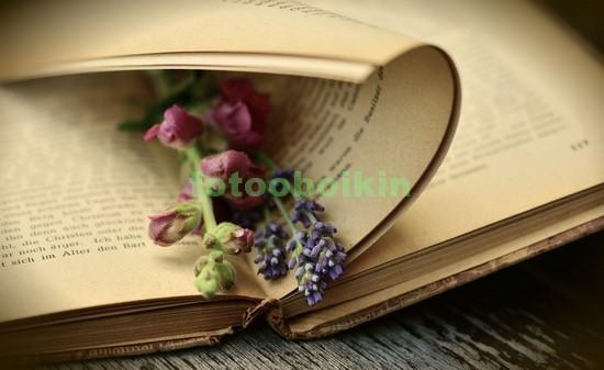Фотообои Книга с закладкой