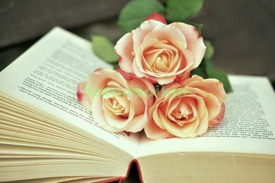 Фотообои Книга с розами