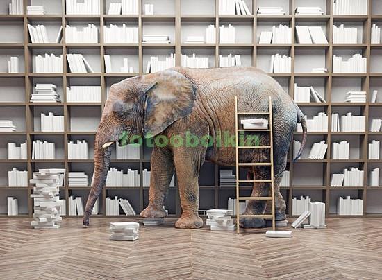 Фотообои Слон в библиотеке