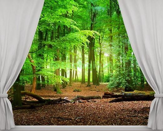 Фотообои Окно с видом на лес