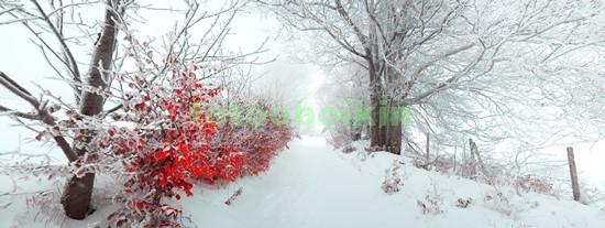 Фотообои Зимний лес