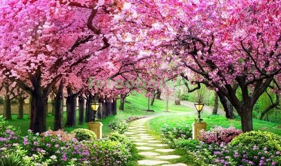 Фотообои Сад с деревьями сакуры