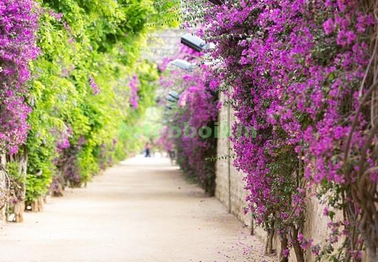 Фотообои Сад с кустами