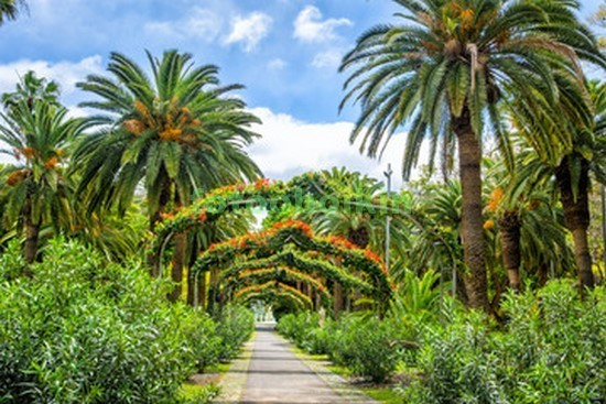 Фотообои Тропический сад