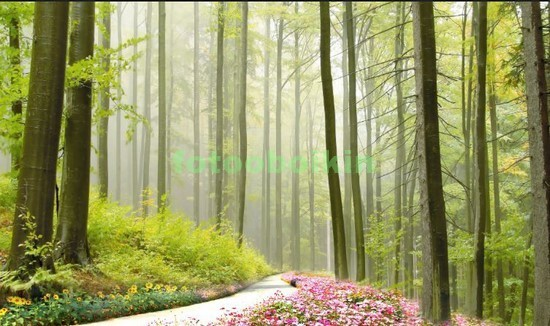 Фотообои Тропинка в саду с цветами