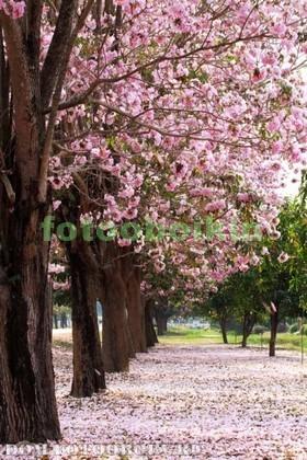 Фотообои Сад с красивыми деревьями