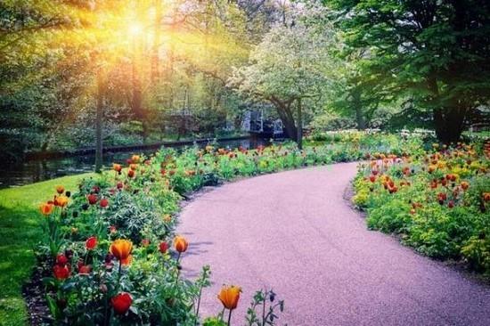 Фотообои Дорожка в саду с тюльпанами