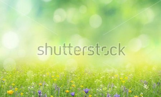 Фотообои Зеленое поле