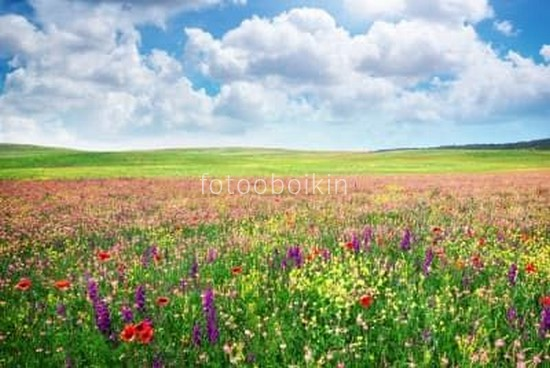 Фотообои Поле с цветочками