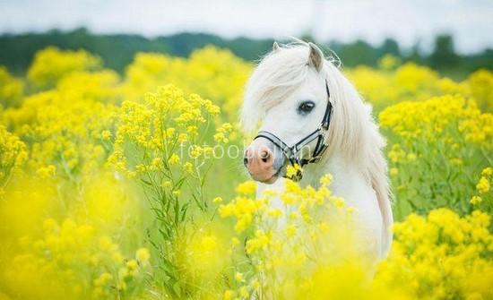 Фотообои Пони в цветах