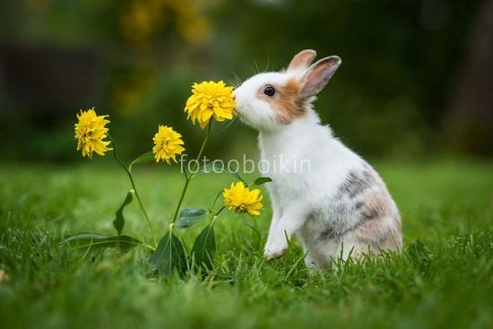 Фотообои Милый кролик