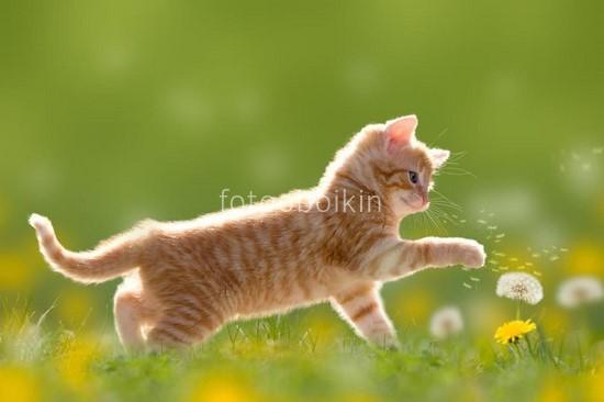 Фотообои Рыжий котик