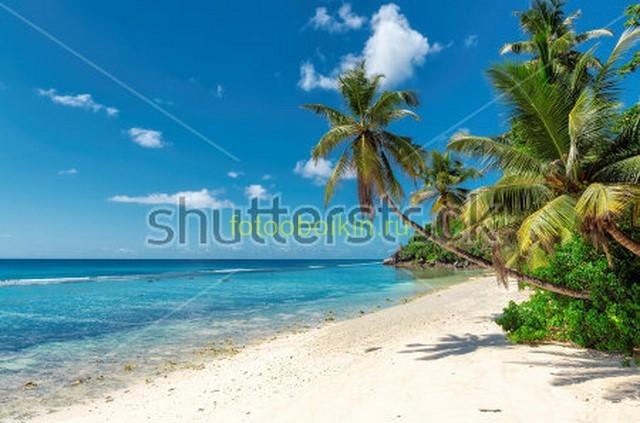Фотообои Голубое море пляж пальмы