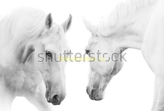 Фотообои Лошади белые