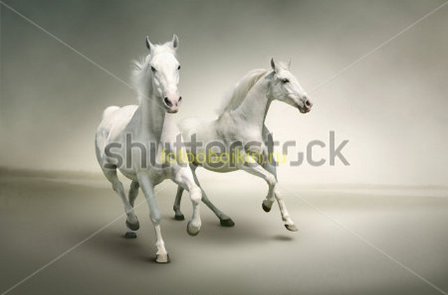 Фотообои Лошади на сером фоне